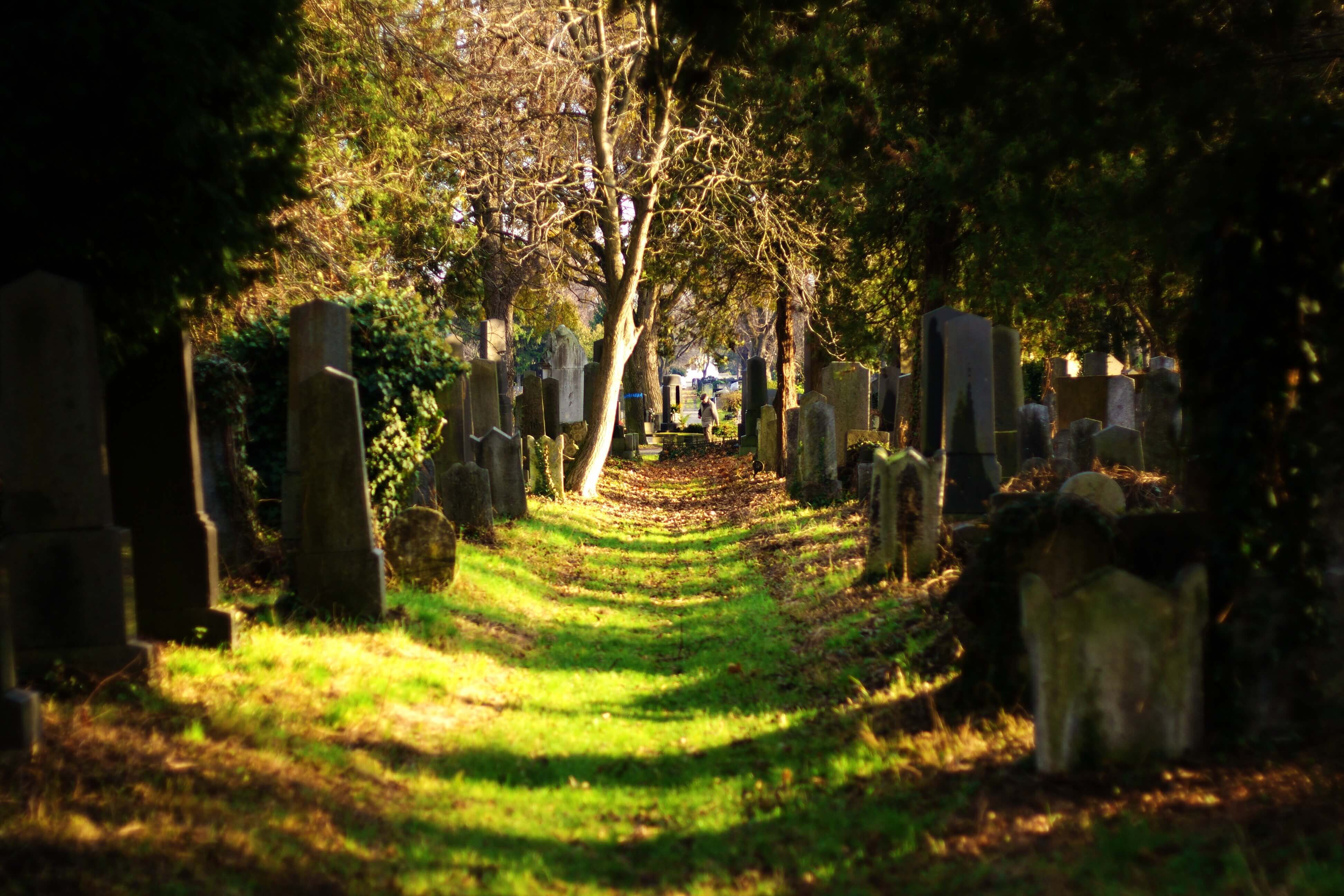 grassy pathway in a cemetery