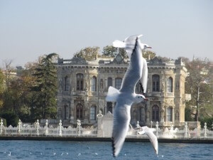 Seagulls flying, with building in background
