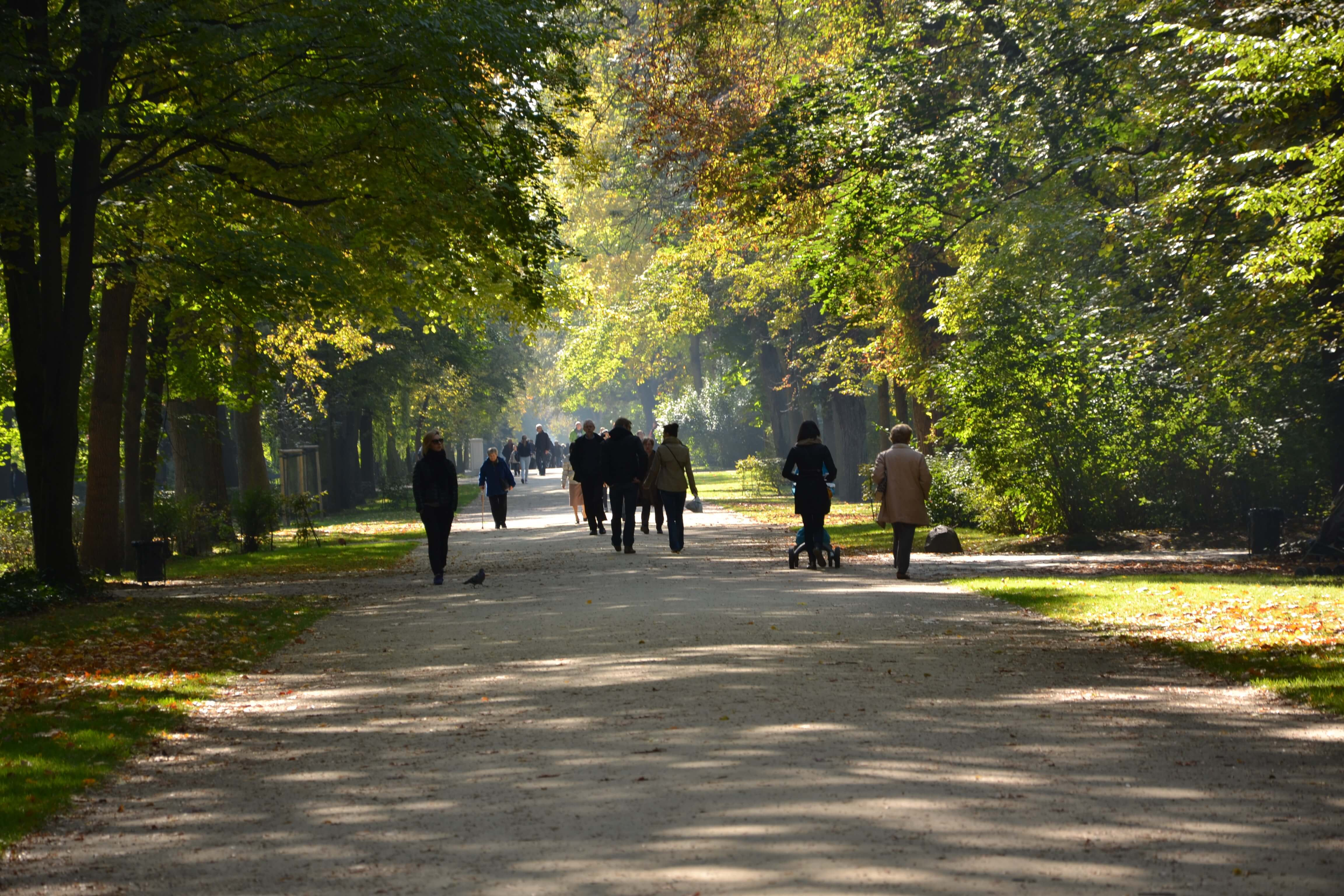 trees, people walking on a path in a park