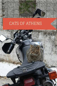 Cat on a motorcycle, cats of Athens frugal first class travel