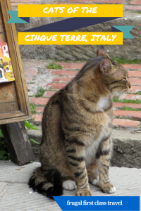 Cats of the Cinque Terre - a photo expose