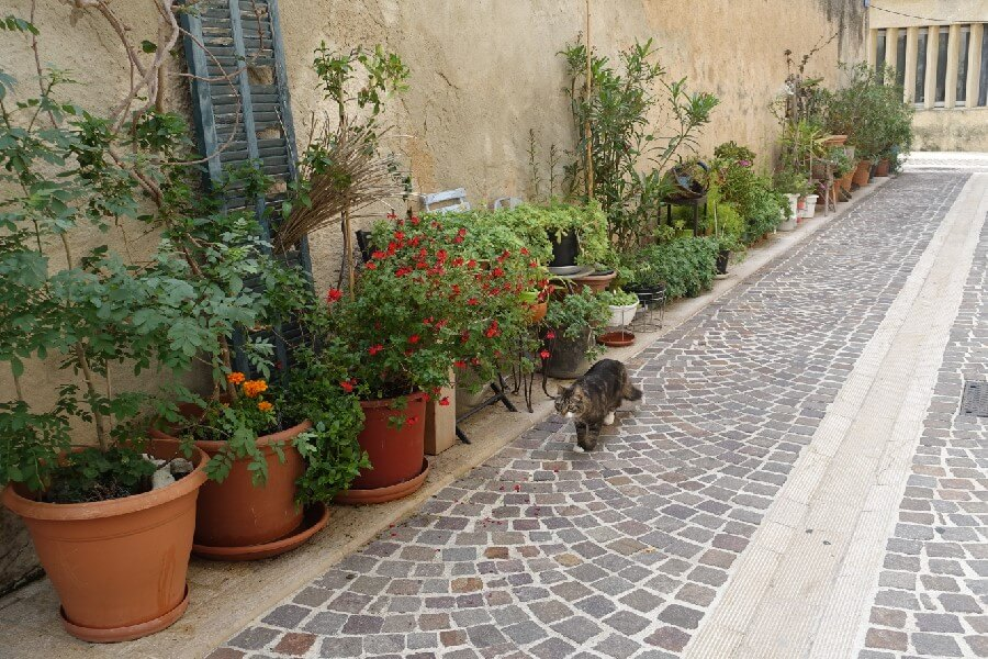 Cat in the backlanes of Cassis French Riviera travel: a day trip to Cassis