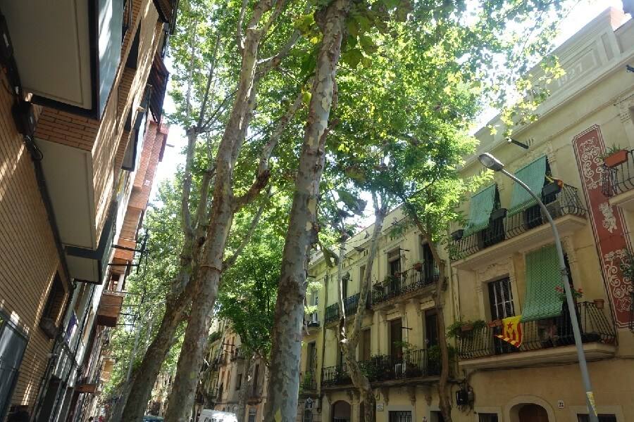 Shady streets in Barcelona